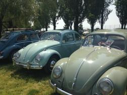 VW Fest (245)