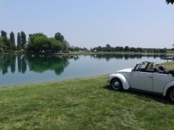 VW Fest (66)